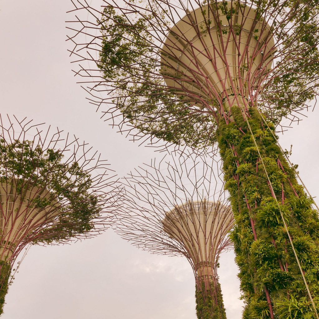 Gardens by the bay2_Singapore